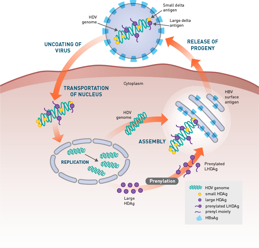 The HDV Lifecycle